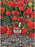 Aubergine (Zier-Aubergine) Solanum aethiopicum Kürbis am Stiel