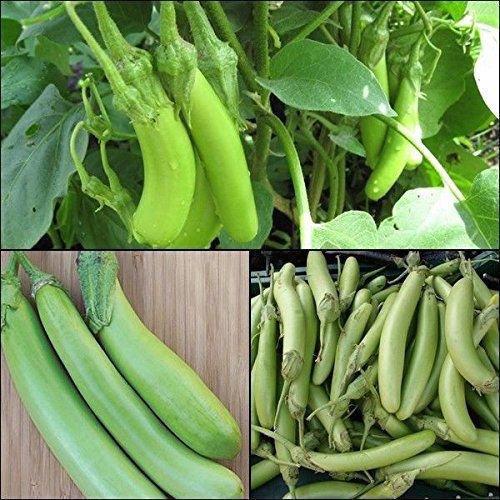 Vert Aubergine Graines Graines de légumes, forme longue, riche saveur, le bon goût, riche en vitamines 100pcs/Pack h24