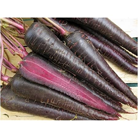 Purple Sun F1-440 Seeds ~ Approx 0.5 Gram Carrot PREMIER SEEDS DIRECT