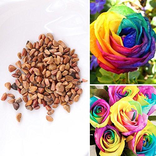 Rosepoem 100pcs colorés rares Rainbow Rose Seeds Floral vivace Balcon extérieur Living