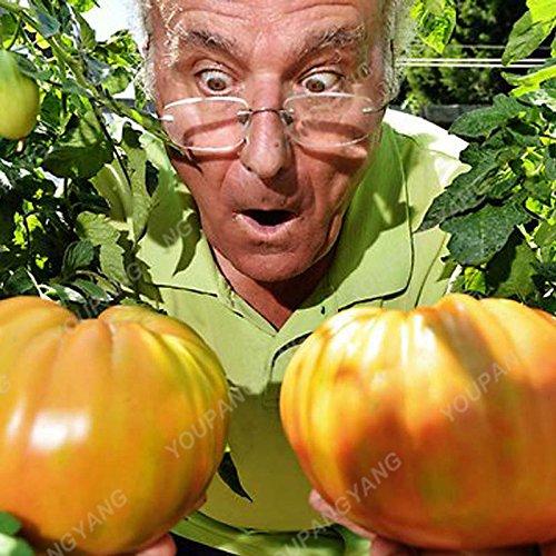 100pcs / sac Rare Tomate beefsteak Graines de bricolage Nutritifs de bonsaïs de légumes pour jardin vivaces Plantes d'extérieur vert