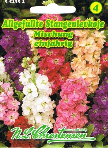 Allgefüllte Stangenlevkoje Mischung , einjährig, duftende Sommerblume, Schnittblume ' Matthiola incana' Levkoje