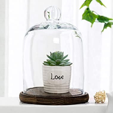 MyGift Clear Glass Bell Jar Cloche Dome Display Centerpiece Decorative Case with Top Handle and Brown Wood Base
