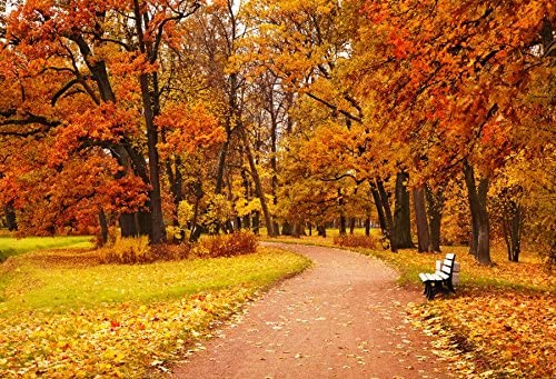 CdHBH 10x12ft Maple Leaf Fall Down Yellow Tunnel Scenery Nature Season Background Autumn Tree Street Road Photo Studio Studio Photo Photography Props Wallpaper Home Decoration Vinyl Material