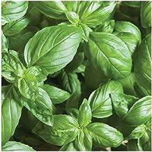 Best eleonora basil seed Reviews