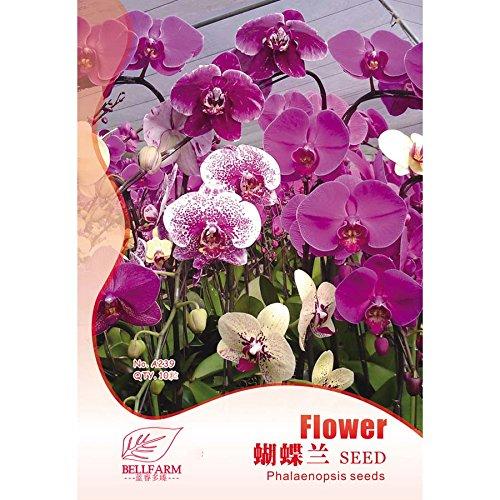 2018 Hot vente Davitu Phalaenopsis Violet rose Orchidée papillon bonsaï, 10 pcs Graines d'origine Lot, lumière parfumée Home Garden Fleurs