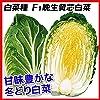 国華園 種 野菜たね ハクサイ F1晩生黄芯白菜 1袋(2ml) 第4種郵便 /21年秋商品