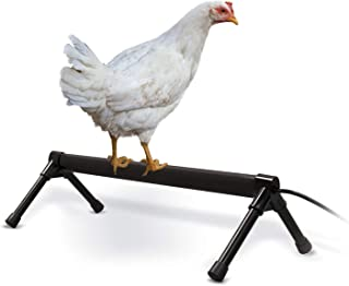 K&H Pet Products Thermo-Chicken Perch - Thermostatically Controlled Heated Chicken Perch