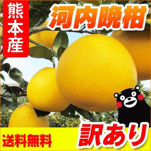 熊本産 訳あり 河内晩柑 10kg 【 九州 熊本 みかん ジューシー オレンジ 晩柑 バンカン 柑橘 】