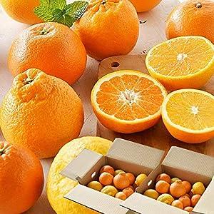 伊藤農園 柑橘 旬 みかん お楽しみ箱 詰め合わせ 福袋 訳あり 小玉 中玉 大玉 4キロ