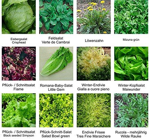 RWS Semences - sélection des semences - Set - Mix - Mix - salade lit 2-12 variétés - environ 3150 graines