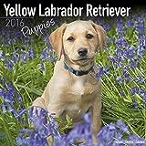 Yellow Labrador Retriever Puppies Calendar 2016