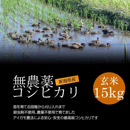 【お土産】無農薬米コシヒカリ 玄米 15kg(5kg×3袋)/アイガモ農法で育てた安心・安全の新潟米