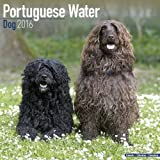 PORTUGUESE WATERDOG 2016 Wall Calendar