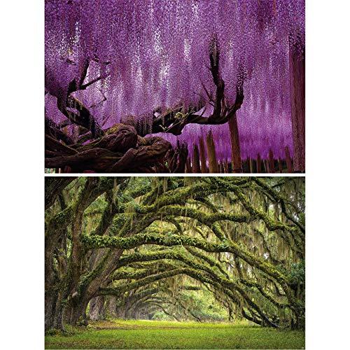GREAT ART 2er Set XXL Poster – Wisteria & Eichen Allee – Blühender Märchenwald Wald-Bäume Frühling Sommer Natur Landschaft Wand-Bild Dekoration Fotoposter Wanddeko (140 x 100cm)