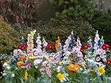 Inter Home Tapis DE Fleurs - Jardin Parc JARDINERIE - 30 variétés et 2500 graines