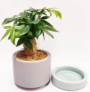 プライム 観葉植物 ミニ 3号鉢 パキラ 風水 縁起 運気上昇 多肉質 (パキラ) インテリア 玄関 リビング 贈り物 ギフト 開業祝