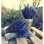 Silk Flower Arrangements LARGE BUNCH PROVENCE LAVENDER FLOWERS DRIED FLOWER BOUQUET 300 STEMS FRAGRANT WEDDING CRAFTS DECORATION by Harrington Marley