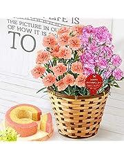 母の日 の プレゼント カーネーション5号鉢 おいもやケーキ洋菓子 花とスイーツ 花鉢 生花 母の日ギフト (2色植え・オレンジ&シャンテリー風)