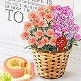母の日 の プレゼント カーネーション 鉢花 ギフト 花鉢 花とスイーツお菓子セット (2色植え オレンジ&シャンテリー風)