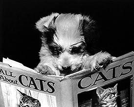 ملصق مطبوع عليه All About Cats مقاس 16×20