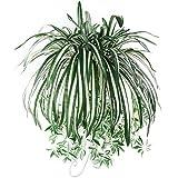 Huhuswwbin Künstliche Pflanzen, 1 Stück, Chlorophytum Comosum, Kunstpflanze, Grünpflanze, Heimdekoration, Hotel-Dekoration, künstliche Spinnenpflanze
