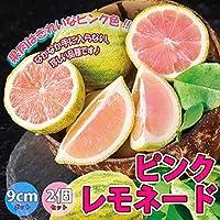 レモンピンクレモネード(庭木の種類)