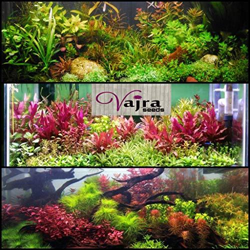 Vjara seeds Aquarium Plants Seeds & Water Grass Mixed Pack- 500 Pieces