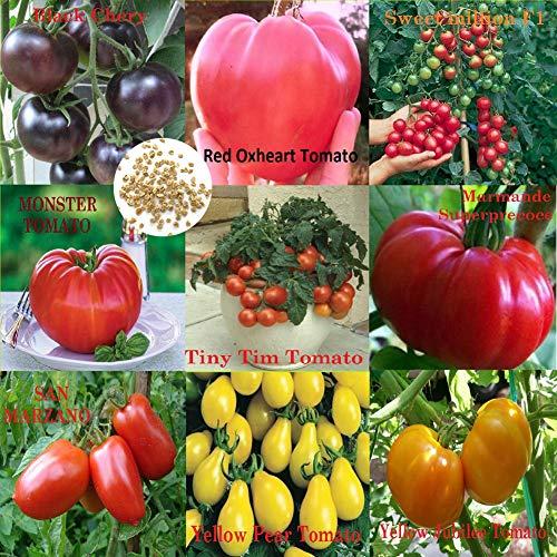 Catkoo Semillas, 500 Unids Mezclado 9-Variedades Semillas De Tomate Jardín Vegetal Jardín De Frutas Planta De Balcón, Sin OGM, Rico En Vitamina C Semillas de Tomate