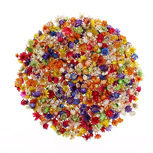 Moonlight Star Real Dried Flowers For DIY Art Craft Epoxy Resin Candle Making Jewellery Ball Filler Dried Flowers Accessories (Color : 200pcs)