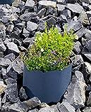 2er Set Hangmanschette, Hang-Pflanzschale, ideal zur Bepflanzung von Hängen, Hügeln, Schrägen mit Blumen und Pflanzen, 35 cm, anthrazit (2er Set)