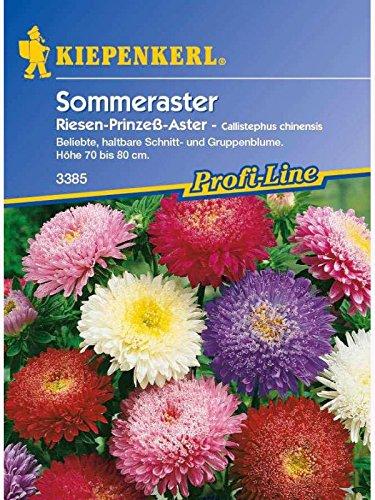 Kiepenkerl Sommer-Aster, Callistephus