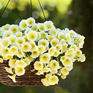 20 Seeds Petunia Easy Wave Yellow Annual Flowers Garden tkpgh