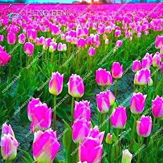 Go Garden Plantas de Flores de Alto Grado Plantas de Tulipanes de Jardãn Plantas de bonsáis Balcã³n Macetas Plantas de Colores Plantas no bulbos de Flores 50 Unidades: Amarillo