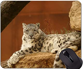 Gaming Mouse Pad,Panther Cat Family Leopard Mouse Pads