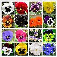 ブルゴーニュ:パック50個美しいパンジーの種16種類ミックスカラービオラトリコロールの花盆栽鉢植えミニ植物ギフトDiyホーム&アンプ。庭園