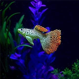 Hot Sale!DEESEE(TM)🌸🌸Plastic Swimming Faux Fake Gold Fish Aquarium Fish Tank Decor Orname Gift (C)