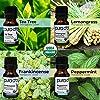 PURA D'OR Perfect 10 Essential Oil Wood Box Set 10mL USDA Organic 100% Pure Therapeutic Grade (Tea Tree-Lemon-Lavender-Sweet Orange-Rosemary-Lemongras... #2
