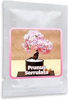 Japanische Zierkirsche/Blütenkirsche 10 Samen/Pack (Prunus