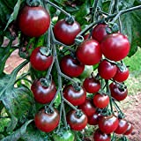 Seeds Package: Seeds : Vegetable Tomato Rosella Organic Seeds