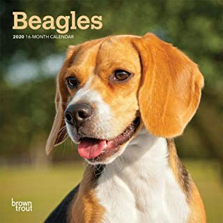 2020 Beagle Mini Wall Calendar, by BrownTrout