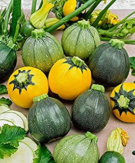 Cicitar Garden - 20pcs Rare Mix Squash Summer Ball F1/Eight Ball F1, High-Yield, Vegetable Seeds Exotic Hardy Perennial