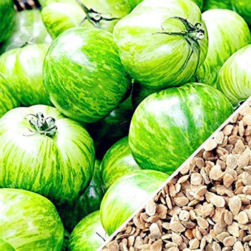 Inovey 100Pcs/Pack Rouge Vert Jaune Tomate Graine De Serre en Pot Bio Légumes Et Fruits Graines - Vert