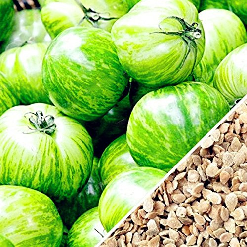 KINGDUO Graines À Effet De Serre Tomate Jaune Vert Rouge 100Pcs/Pack en Pot Potager Organique & Fruits Graines-Vert