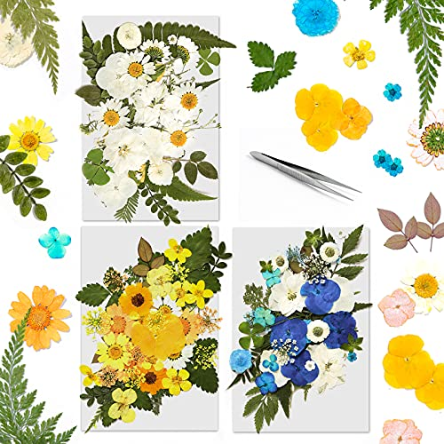 120 PCS Dried Pressed Flowers for Resin,Art Natural Dried Flowers,Colorful Chrysanthemum Daisy with Tweezers for Scrapbooking DIY Candle Decoration Resin Jewelry Crafts Making (Blue,White,Yellow)