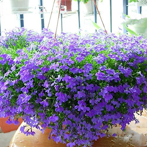 Aerlan Frühling Blumen mehrjährig...