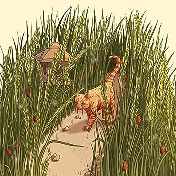 Path Through the Tall Grass