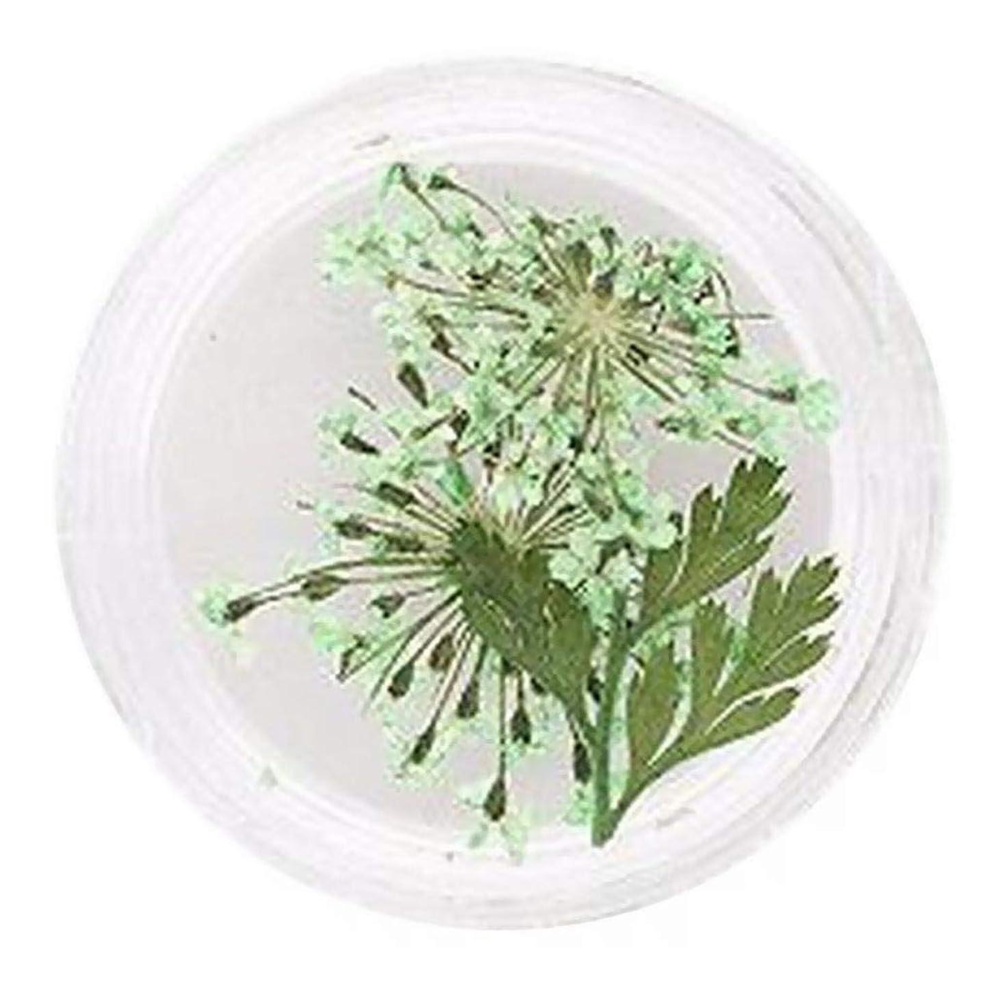分泌する重さキロメートルPlus Nao(プラスナオ) ネイルアート ネイルパーツ 押し花 ドライフラワー フラワーパーツ お花 華やか デコレーション セルフネイル アート