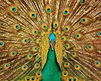 絵画キャンバスアクリル絵の具鳥孔雀の羽の尾数字によるDiyデジタル絵画現代の壁の芸術クリスマスホリデーギフト家の装飾 カスタマイズ可能 40x50cmフレームなし
