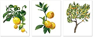Botanical prints wall art #A011 - Set of 3 prints(8x10 inches).Lemon tree wall art, Lemon print,lemon tree watercolor painting. Yellow home decor, Fruit painting,Fruit prints.Lemon posters.